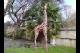 Small Giraffe garden ornament, safari giraffe large outdoor statue